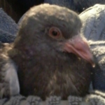 Altona 25.01.2014 Ladenecke - das Baby Corny 1
